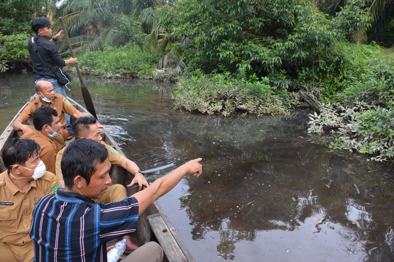 Diduga Tercemar Limbah PKS, Habitat Hewan Air Sungai Sei Sirah Mati Mendadak